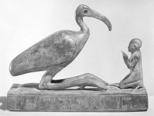 figura ibis dios egipcio thot